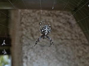 spider-111967