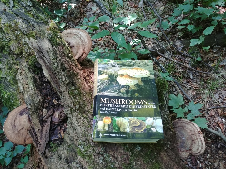 Book Review: Mushrooms of the Northeastern United States and Eastern Canada